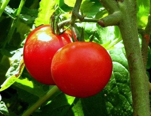 la tomate contre la constipation