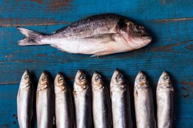 Manger du poisson bleu après une crise cardiaque