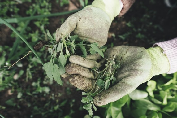 mettre du paillage végétal contre les mauvaises herbes