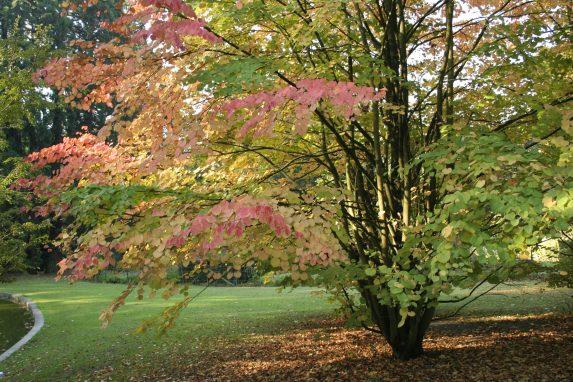 terre acide sous un arbre