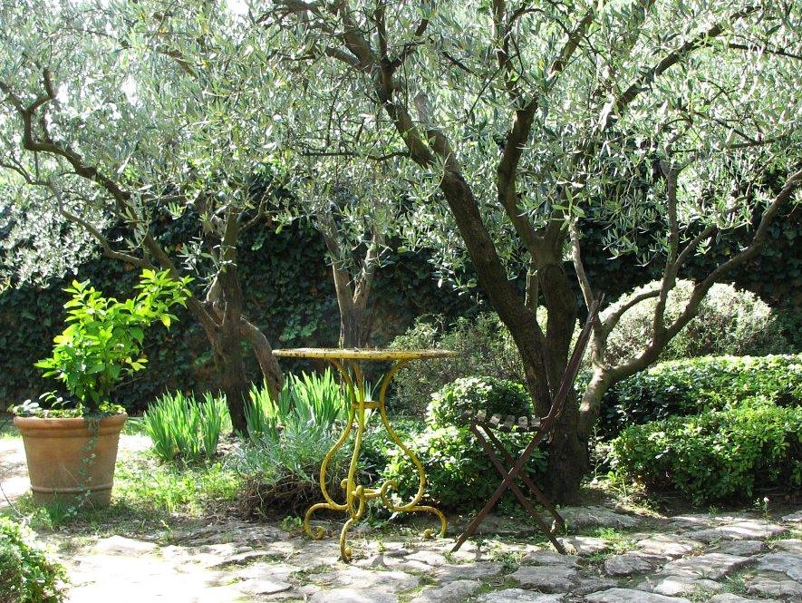 olivier petit arbre pour petit jardin