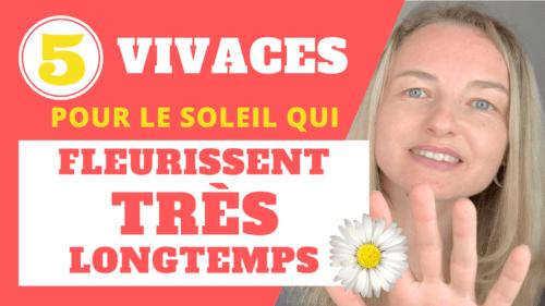 5 plantes VIVACES pour le soleil qui fleurissent TRES longtemps