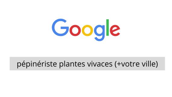 recherche de pépiniériste spécialisé plantes vivaces