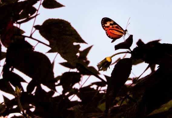 papillon dans l'ombre