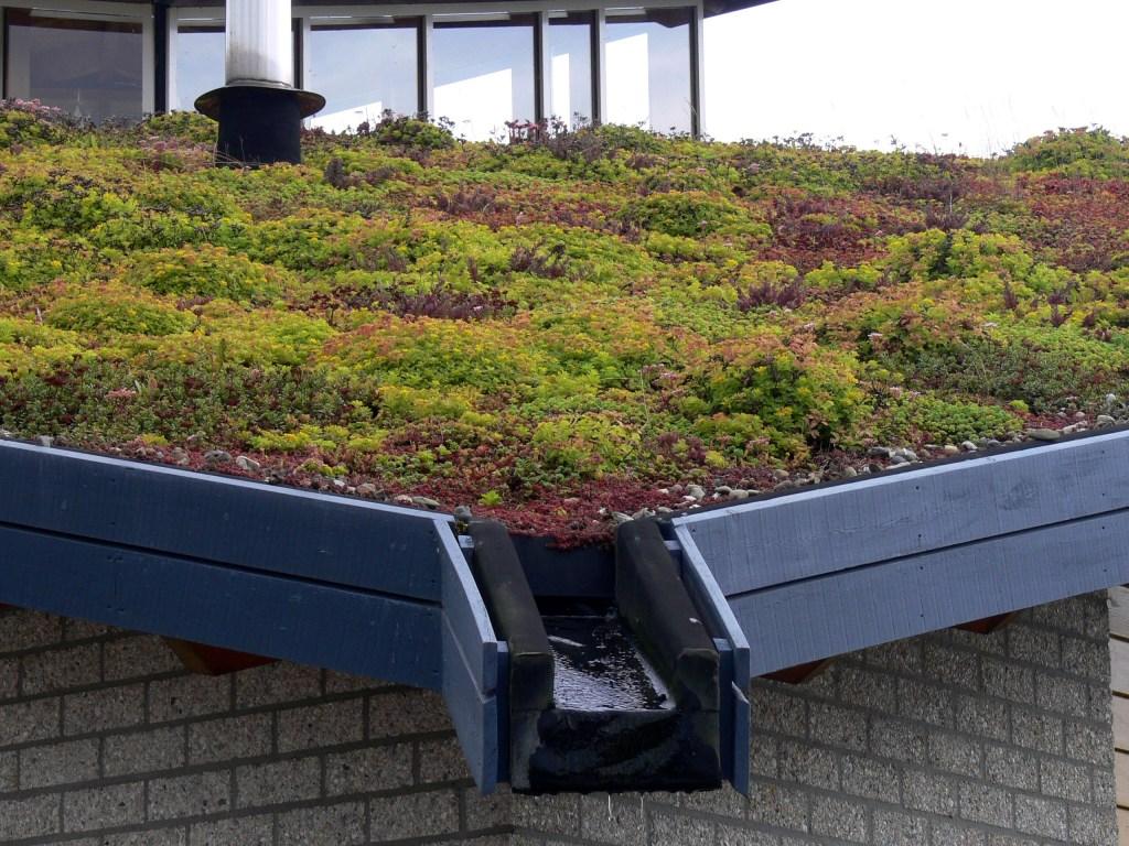 jardinier paysagiste toiture végétalisée