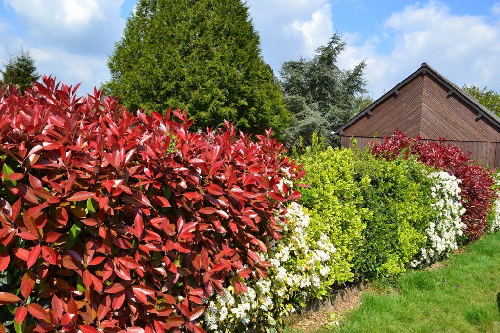 arbustes persistants pour se cacher