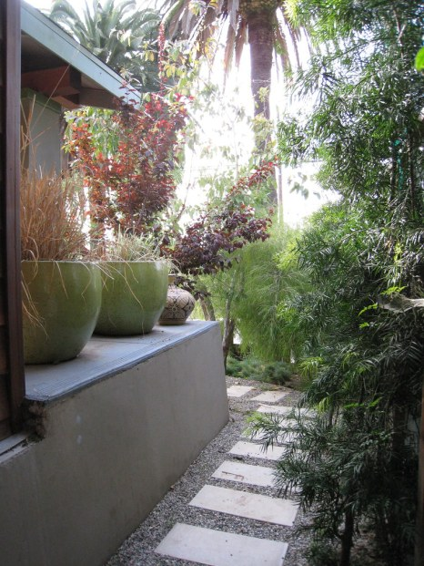 Aménagement de jardin avec un grand palmier Trachycarpus qui résiste au gel