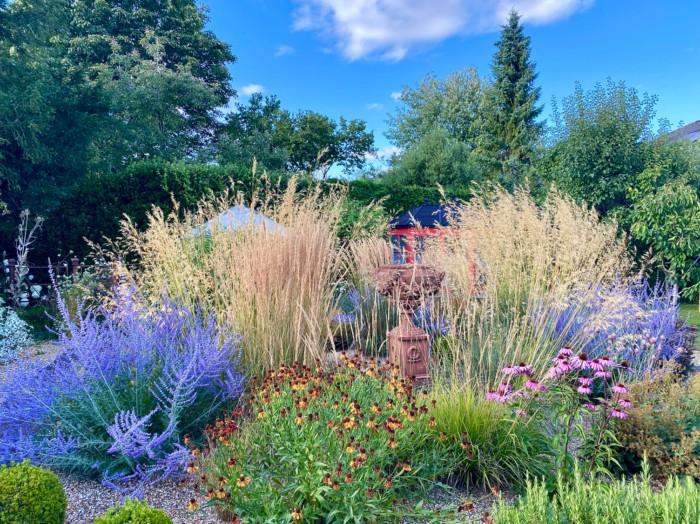 massif coloré avec des grandes graminées et des vivaces à fleurs bleues
