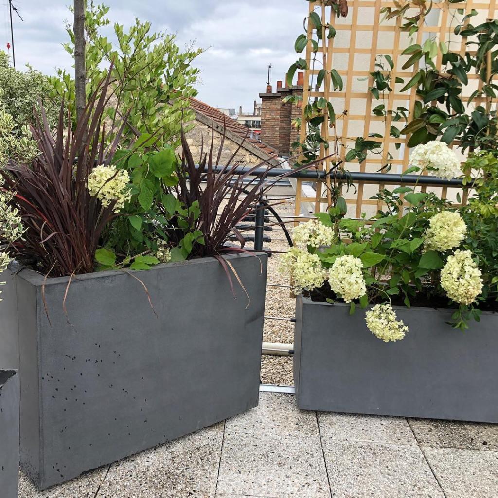 nombre de plantes grimpantes dans un pot