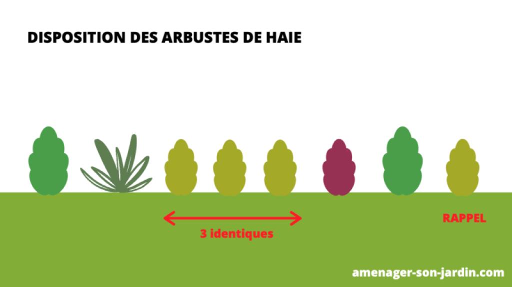 schéma plantation arbustes de haie variée