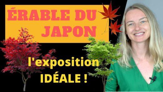 quelle exposition pour un érable du japon