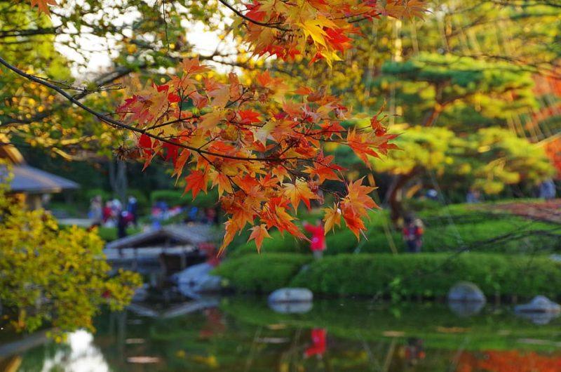 visite d'un jardin japonais avec de beaux érables du japon colorés