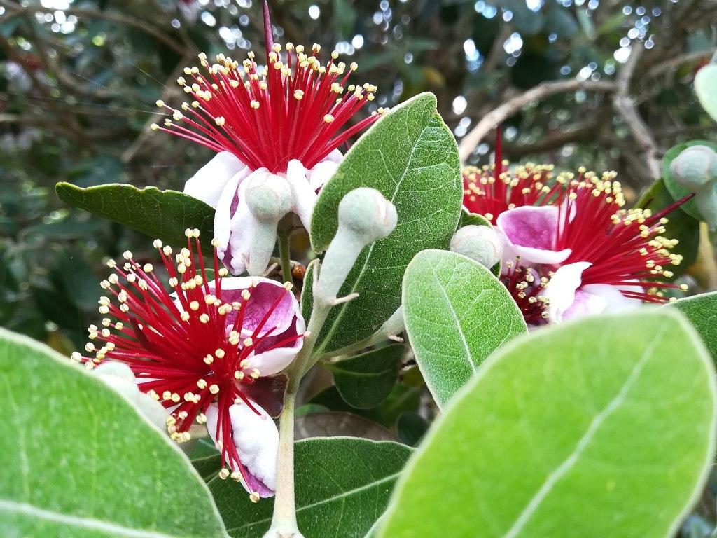 floraison au soleil de l'arbuste pour haie