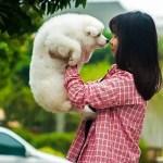 女の子とサモエド犬の子犬