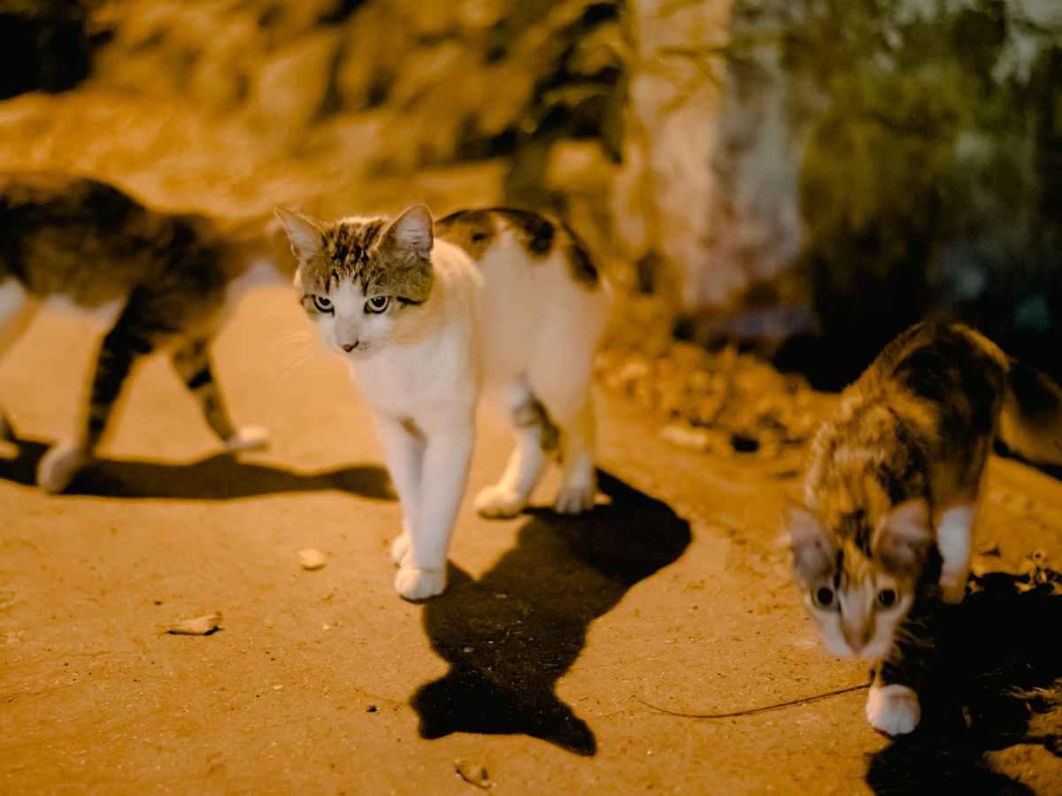 cute cats walking on street
