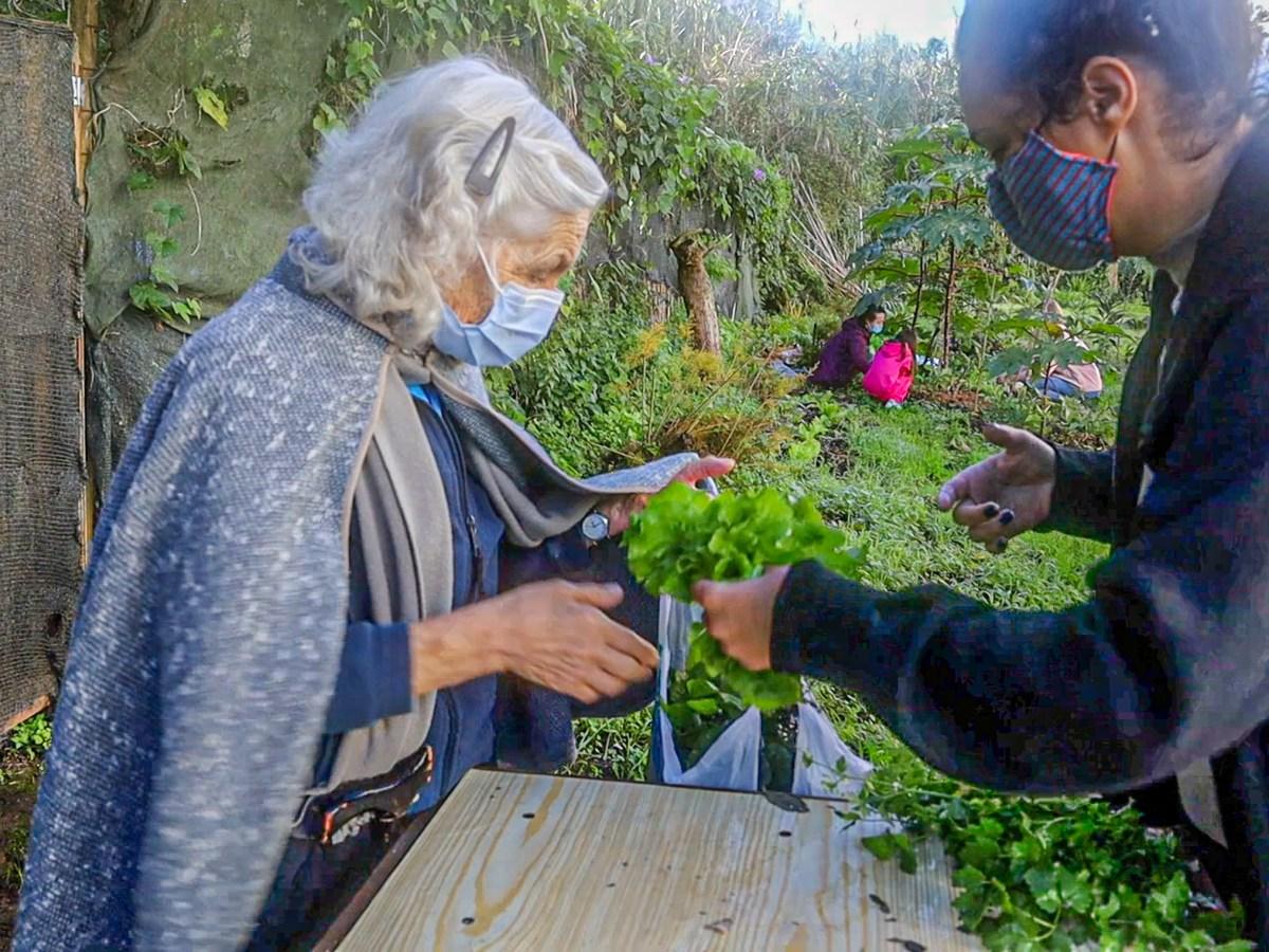 Bela Flor agrofloresta Campolide horta vizinhos