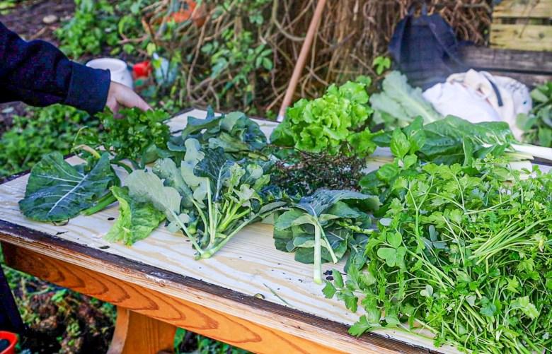 A Agrofloresta da Bela Flor tem reunido voluntários e moradores do bairro