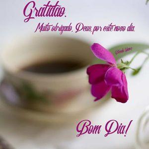 Mensagem Bíblica de Bom dia - Gratidão