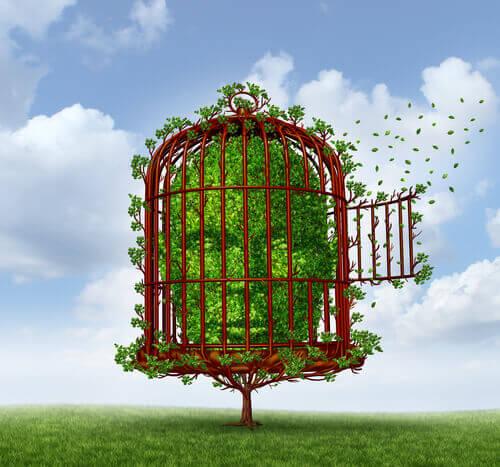 Cabeça de arbusto presa em uma gaiola