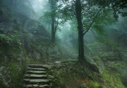floresta-sombria