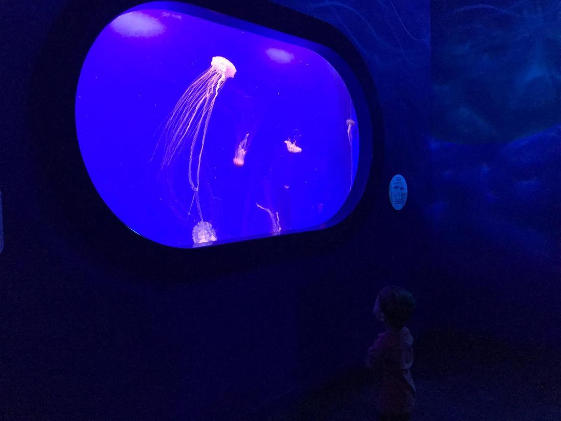 medusas oceanografic (2)