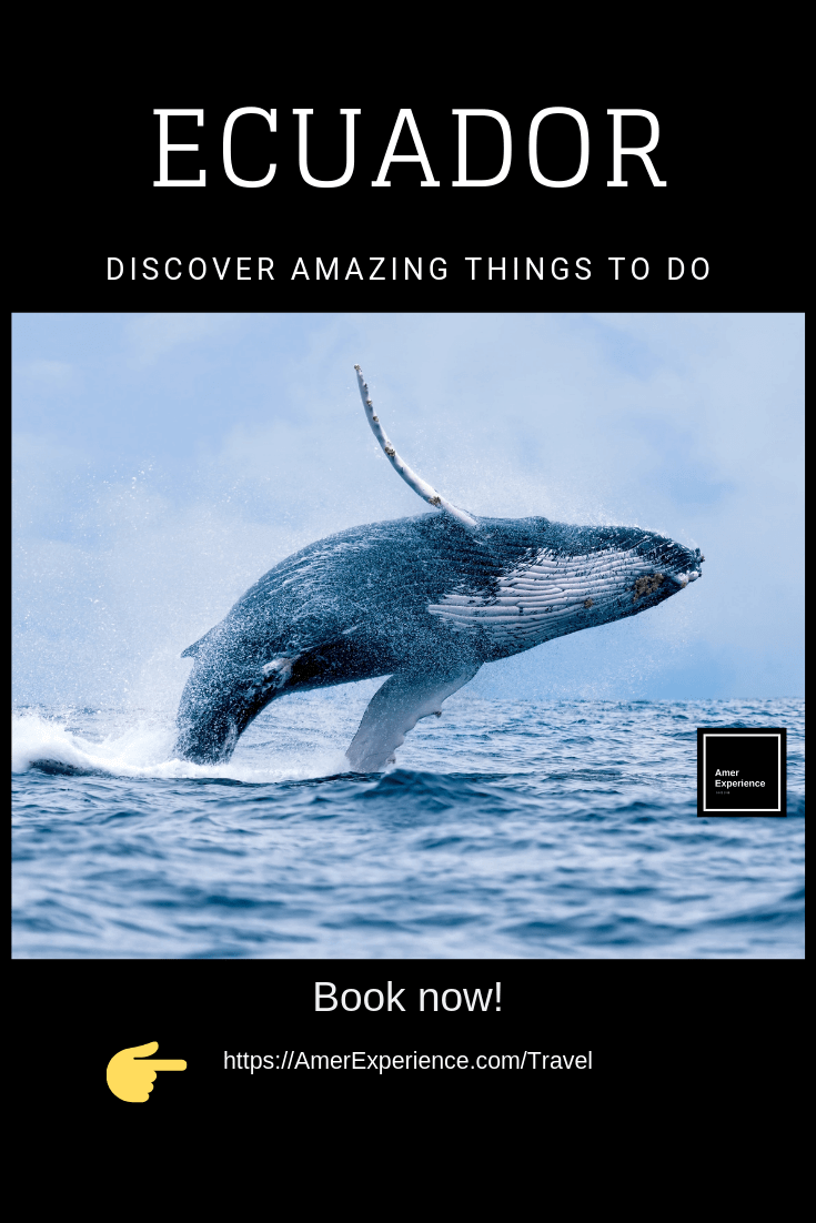 Discover Amazing Things To, AMER EXPERIENCE