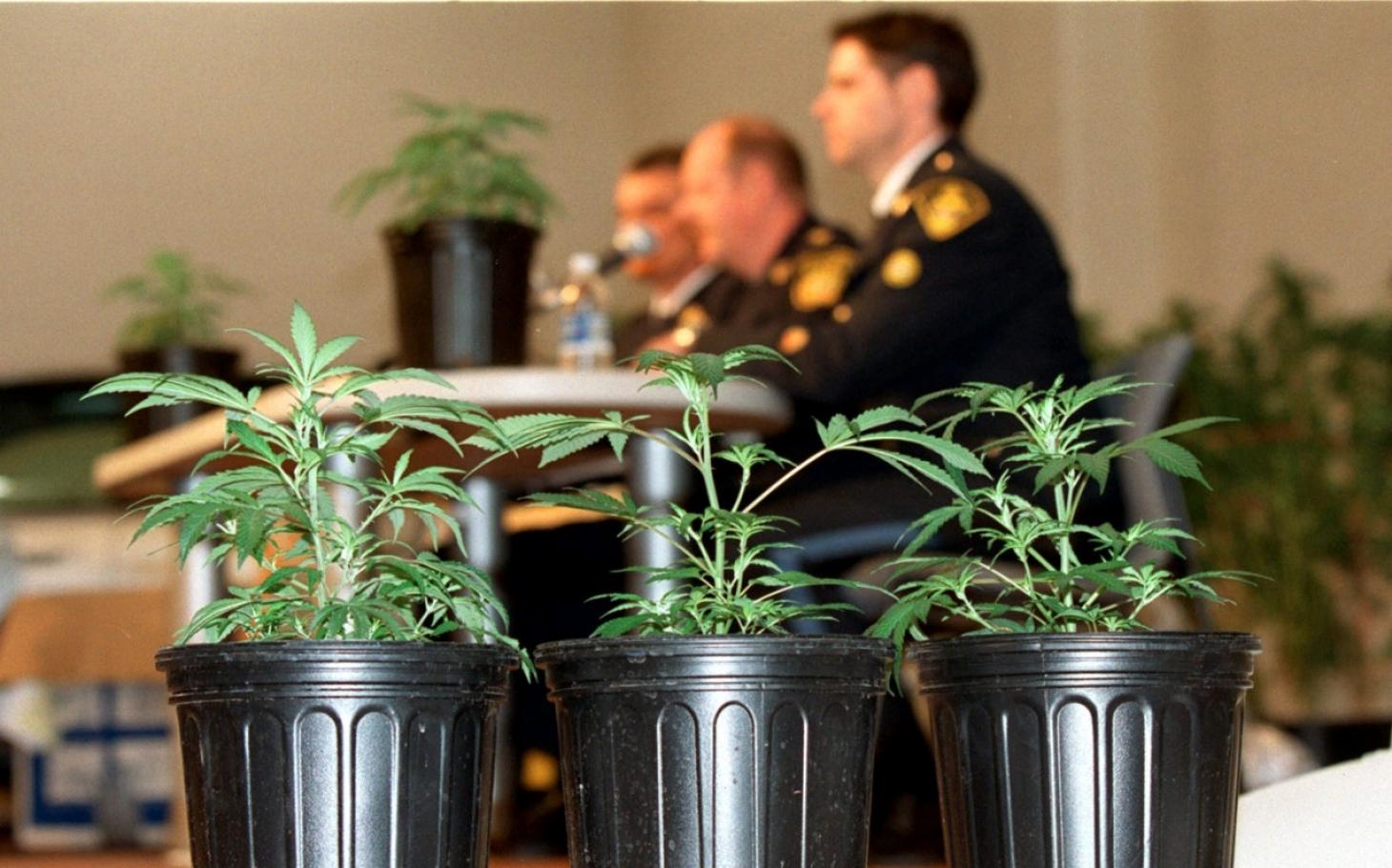 DEA Obstructs Research Into Medical Marijuana Report Al Jazeera America