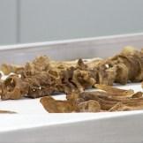 Human remains awaiting the identification process at Bogota CSI Lab.