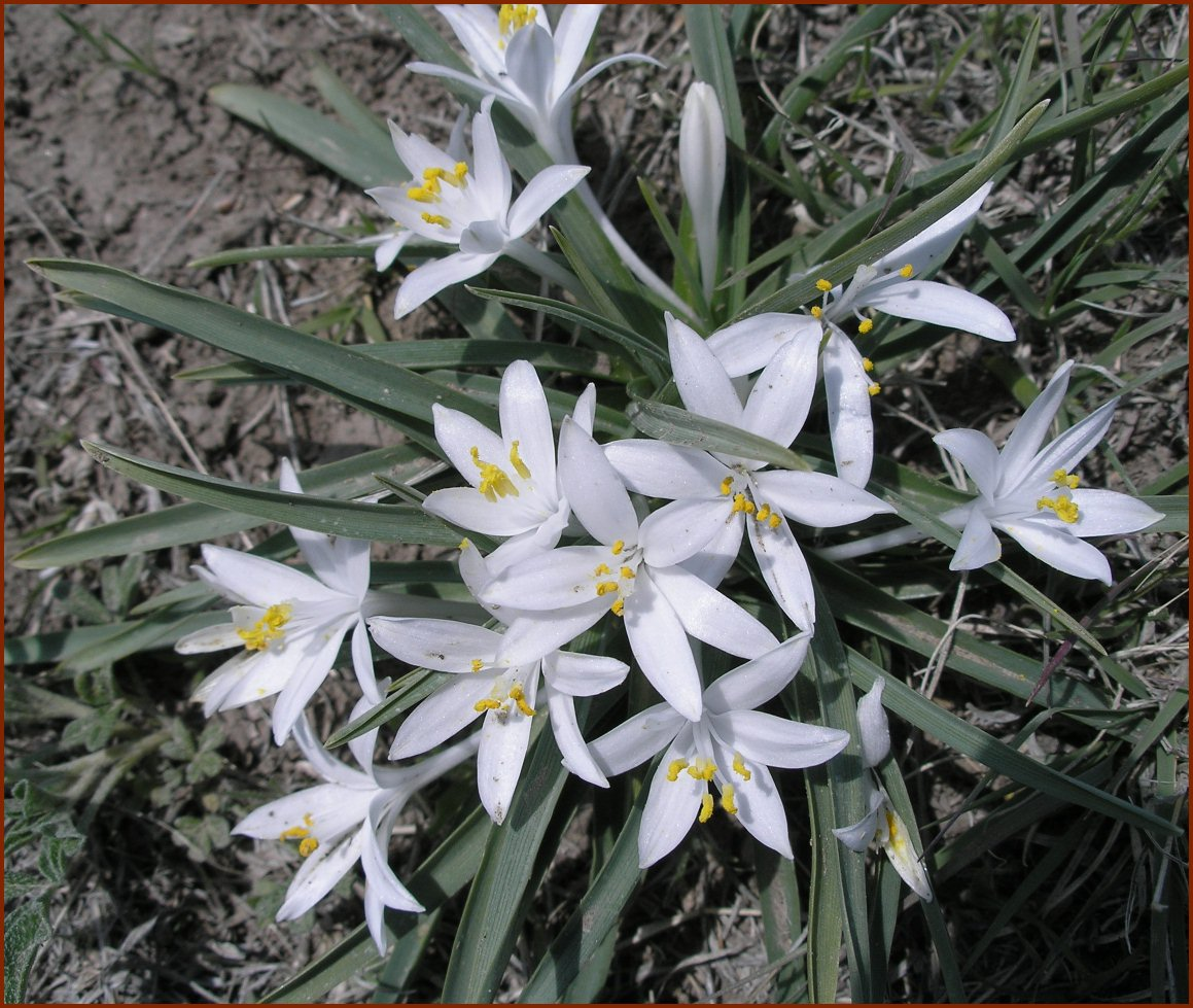 Live Blooms — © 2008 America InContext