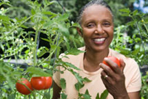 Harvesting-Organic-Tomato-Basics-ch