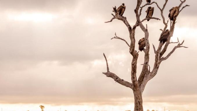Album art for Red Sammy 'Vultures'