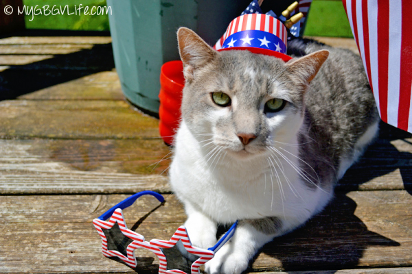 cat wears american flag hat