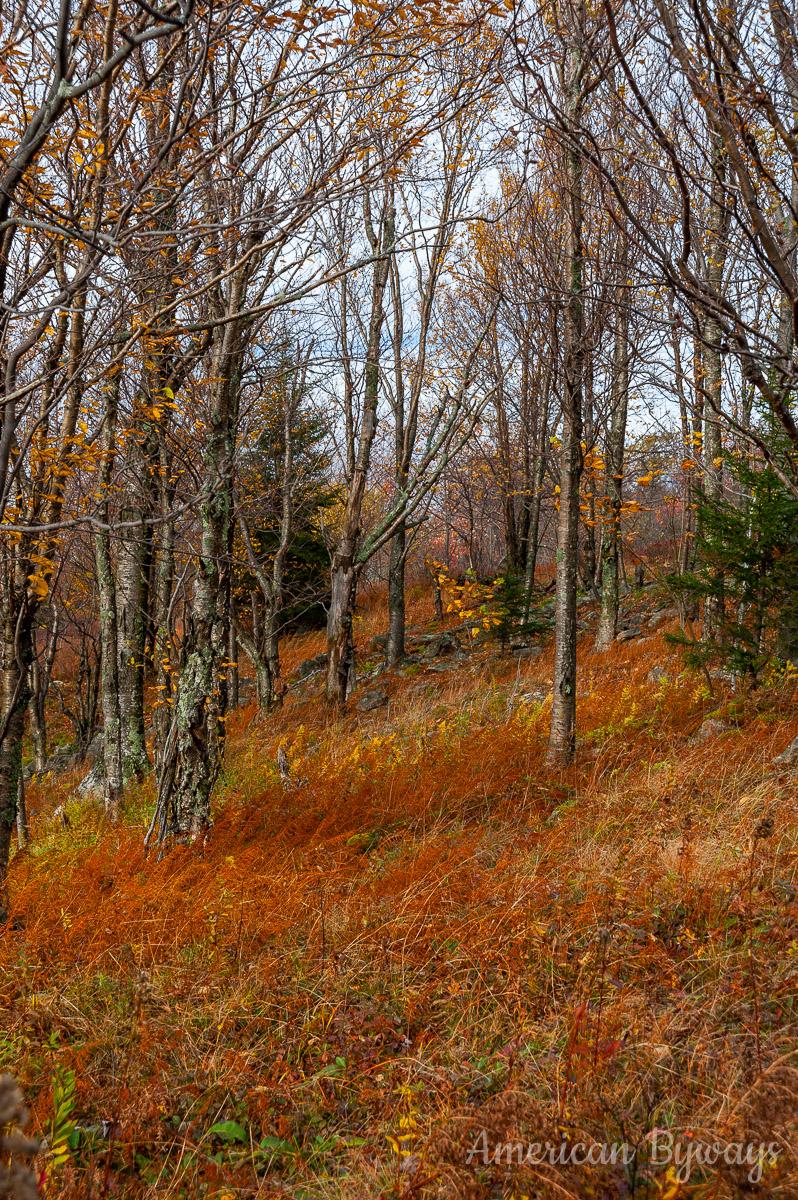Along the Beaver Dam Trail (No. 520)