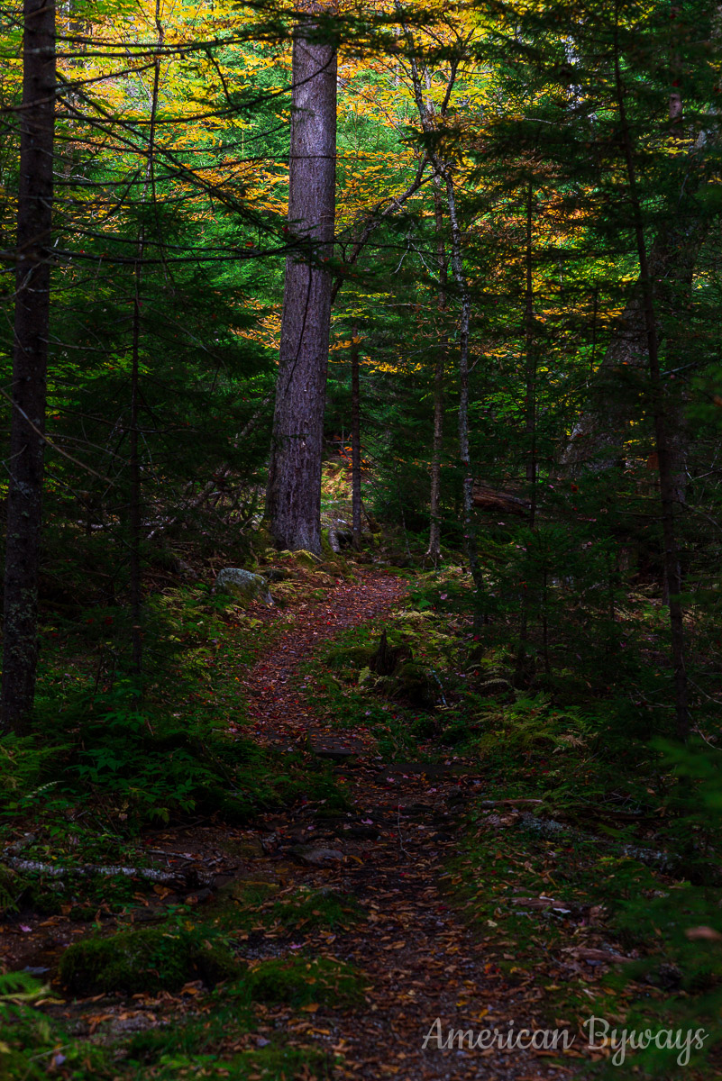 Gaudineer Old Growth Trail