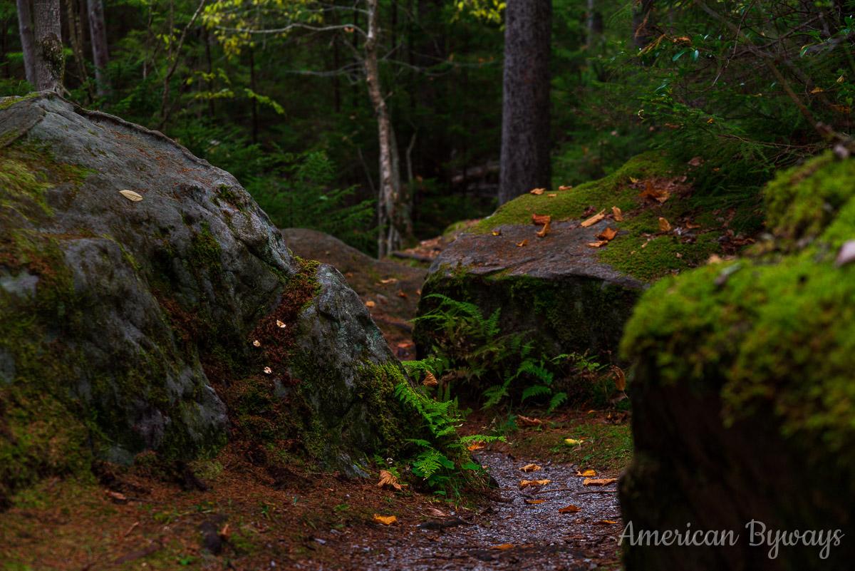 Gaudineer Interpretive Trail