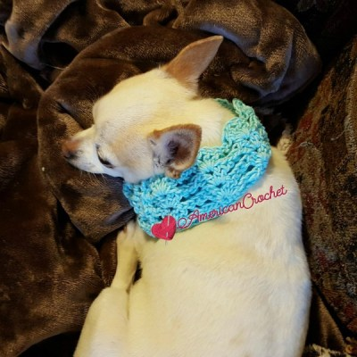 Vintage Lace Dog Collar