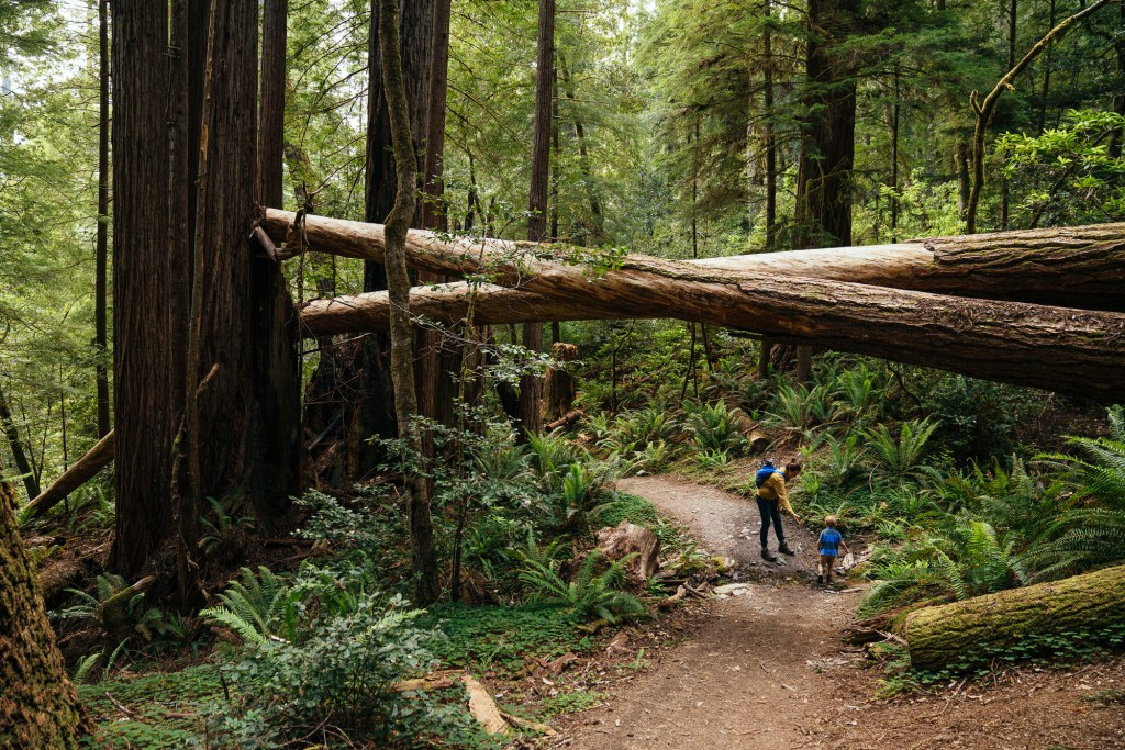 hiking with kids in redwoods national park