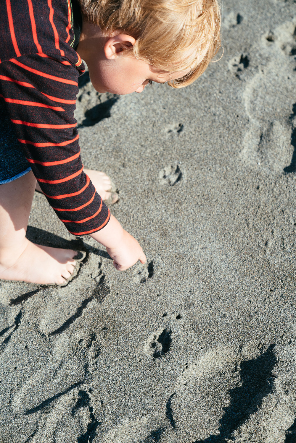 Examining creature tracks, in this case a local puppy out for a walk.