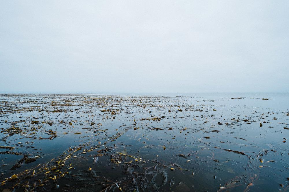 Giant kelp forest