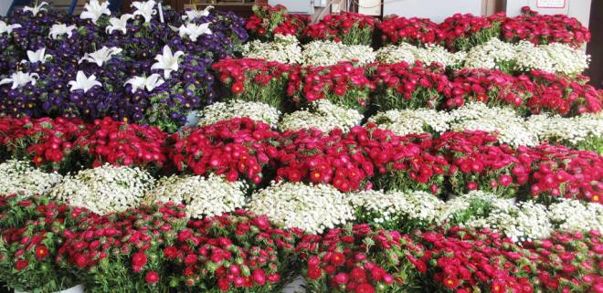 Blooming Patriotic!