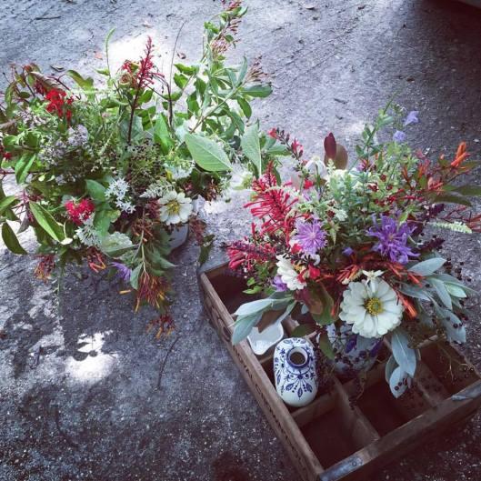 FLORIDA: Williams Wildflowers