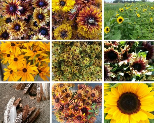 Inspiration board featuring NW-grown flowers from Jello Mold Farm, Everyday Flowers, Sonshine Farm and Rain Drop Farm.