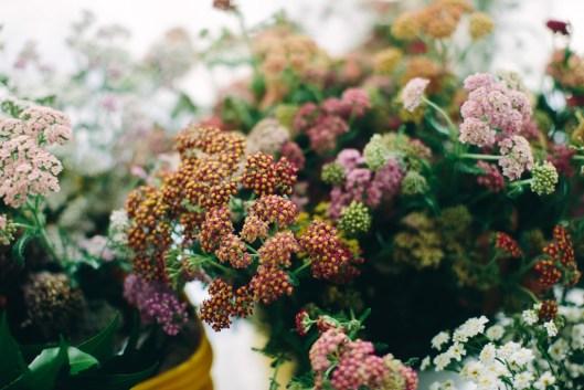Lovely summer annuals (c) Angela Zion