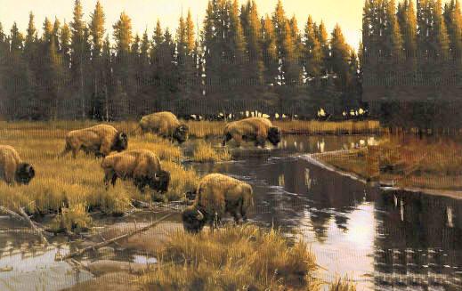 Yellowstone Crossing