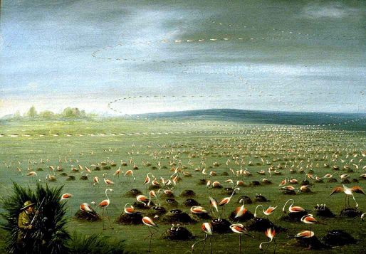 Ambush For Flamingos