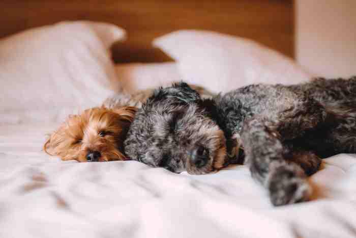 beneficios pasear perro