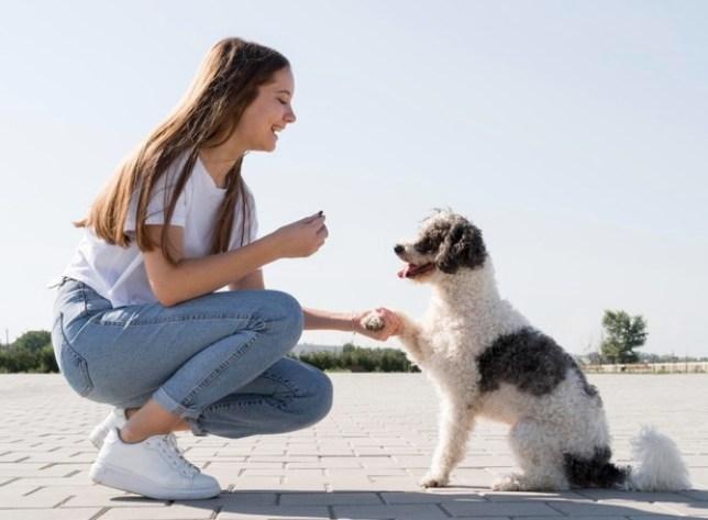 Si estás buscando un perro adulto, existe la posibilidad de que tenga buenos hábitos de comportamiento