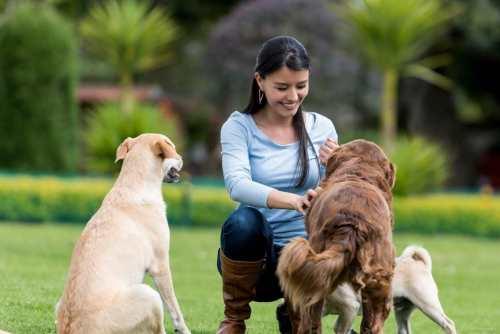 5 Beneficios de adoptar un perro como mascota que mejorarán tu calidad de vida