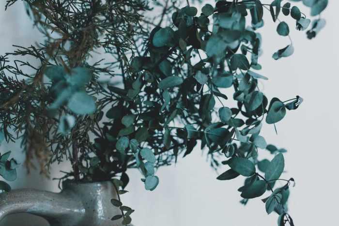 7 Beneficios que aporta a la salud de tener eucalipto en el baño