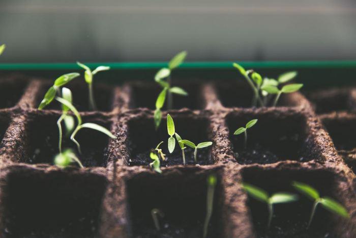 Plantas que almacenan carbono, la esperanza del cambio climático